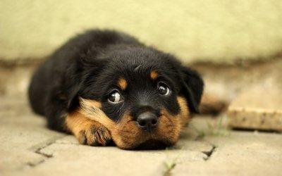 Cuáles son los mejores y peores suelos de piedra para mascotas